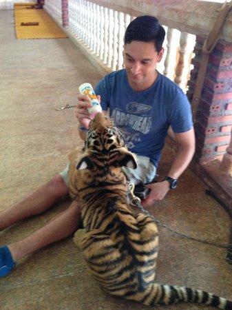 Tiger Temple ( Wat Pa luang Ta Bua) : Feeding