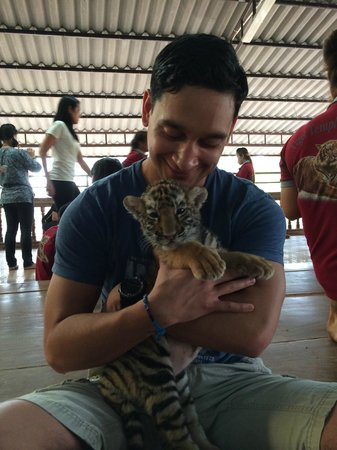 Tiger Temple ( Wat Pa luang Ta Bua) : Baby Tiger