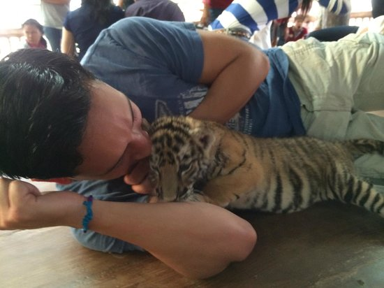 Tiger Temple ( Wat Pa luang Ta Bua) : Playing with baby