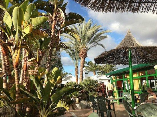 Canary Garden Club: Uteserveringen