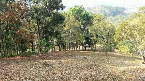 The Dusun: Autumn in Seremban?