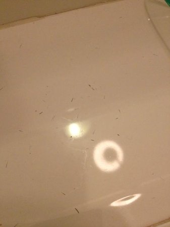 The Craiglands Hotel: hair clippings around sink
