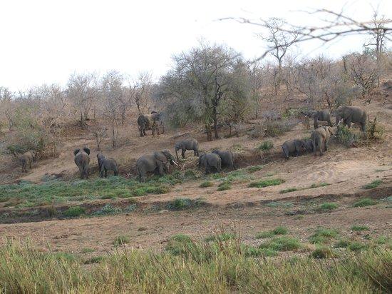 Sirheni Busheld Camp: uitzicht vanaf terras