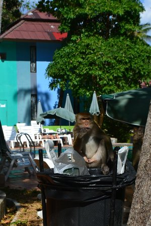 Anyavee Railay Resort : Monkey