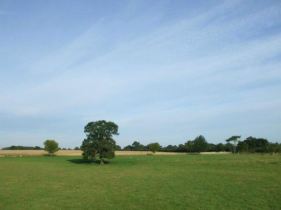 Mythe Farm Bed & Breakfast: Gorgeous views across the farm