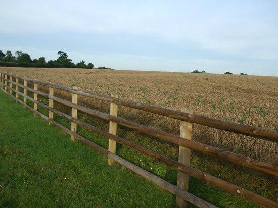 Mythe Farm Bed & Breakfast: Arable field on the side of the long drive