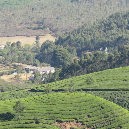 Rose Gardens : On the way to Thekkady from Munnar