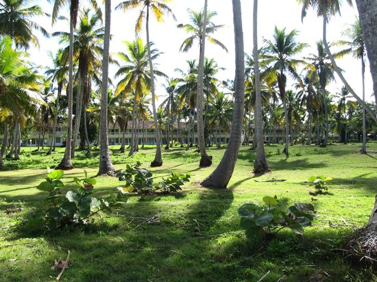Grand Paradise Samana : The hotel from tha path, that leads to Las Galeras