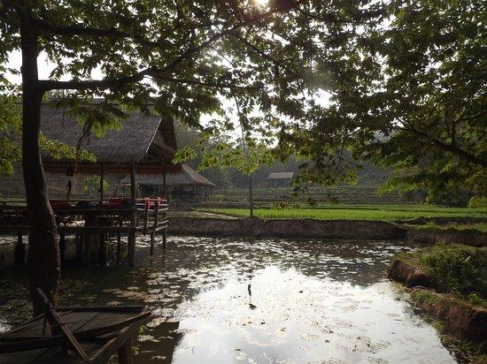 Kamu Lodge : vue sur les rizières