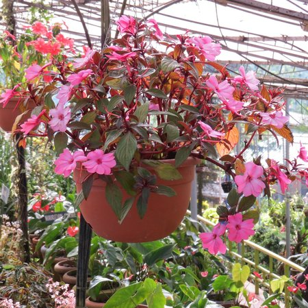 Rose Gardens : Not just Roses!