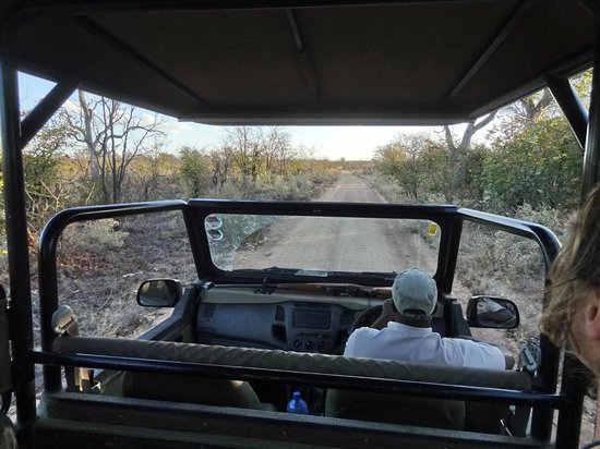 Bateleur Bushveld Camp: night drive met ranger