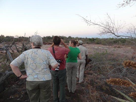 Bateleur Bushveld Camp: wandelingetje tijden night drive