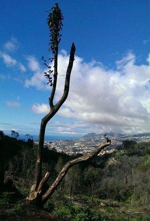 Casa Velha do Palheiro : View from the botanical gardens