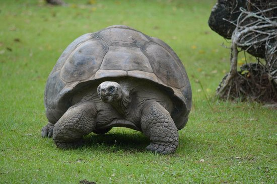 Zoo Miami: огромные черепахи
