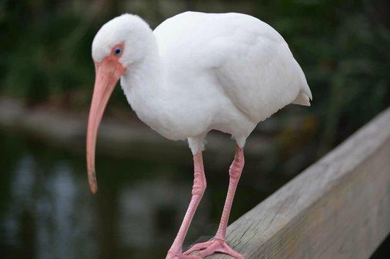 Zoo Miami: цпелька