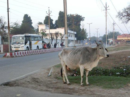 Grand Hotel Agra: ホテルの前の道