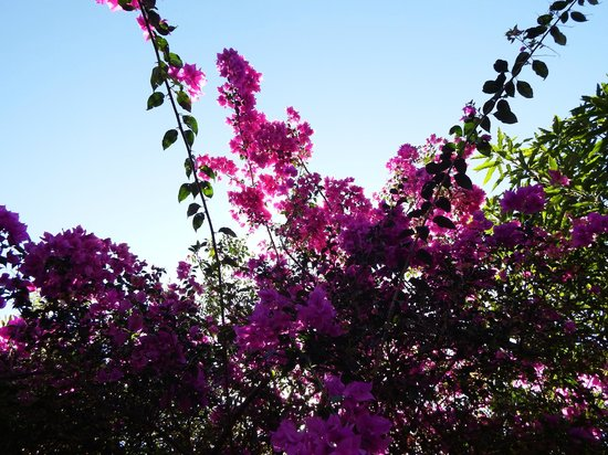 Eden Atenas: amazing gardens