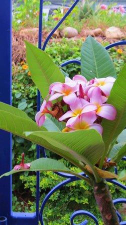 La Rose Bed & Breakfast: flowers