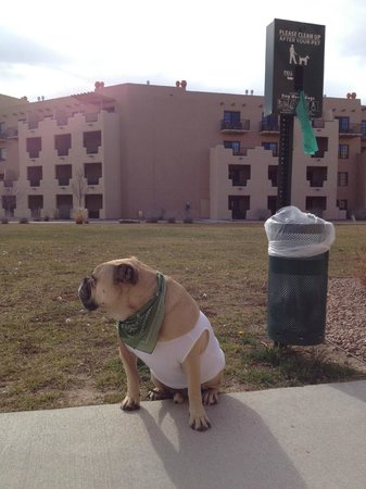 Hilton Santa Fe Buffalo Thunder: Potty Station in the Pet Friendly Grass Courtyard