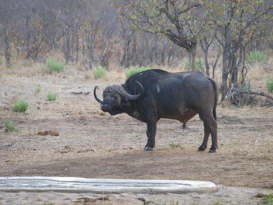 Bateleur Bushveld Camp: Bij de uitkijkpost in het kamp