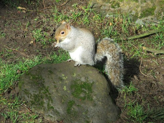 Parque Peasholm: Feeding the squirrels