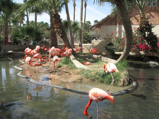 Dillon's KC BBQ: You can view the flamingos on Dillon's patio.
