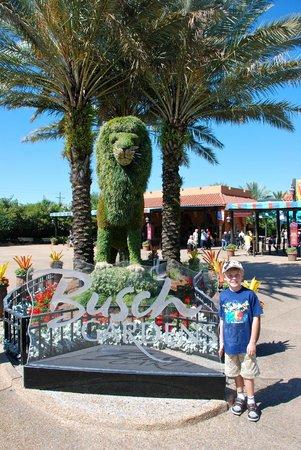 Jardines Busch: Entrance to Busch Gardens.