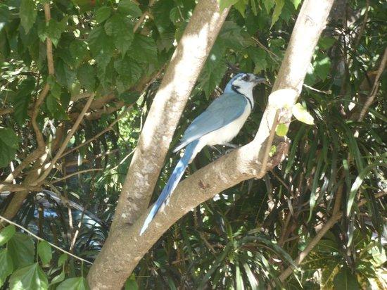 Hotel Las Tortugas : l'uccello principe