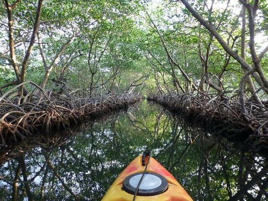 Castaways Cove: More mangrove