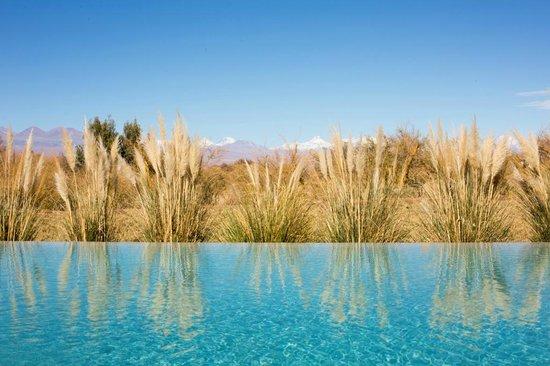Tierra Atacama Hotel & Spa: Dive in