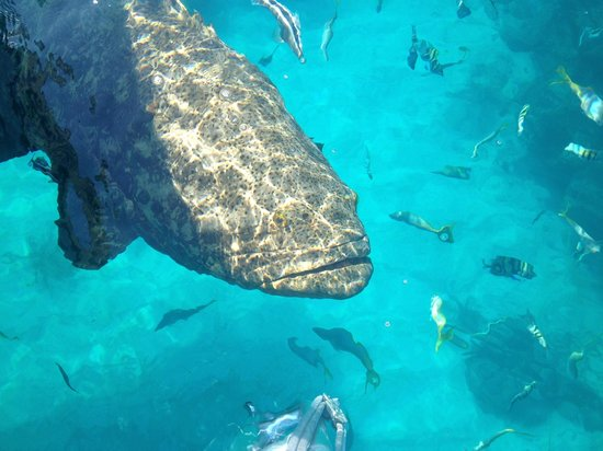 Snorkeling Or Scuba Diving? Both Are Excellent At Looe Key