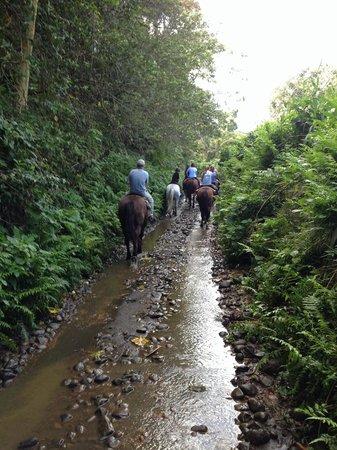 Na'alapa Stables - Waipio Valley: Going through a small creek
