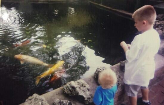 Sarasota Jungle Gardens : koi pond