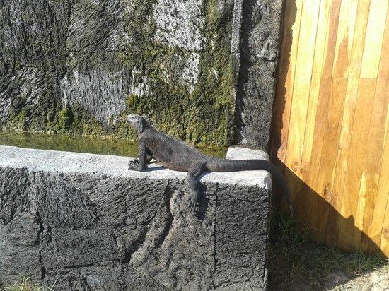 Iguana Crossing: Hotel