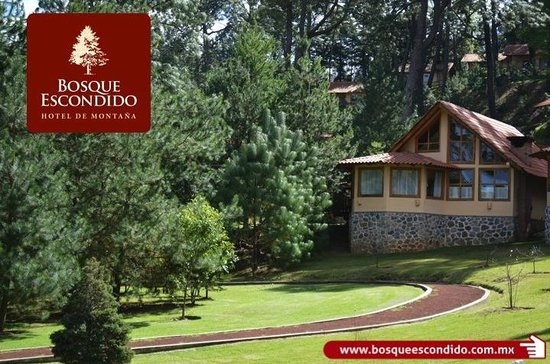 caba as suite para 2 personas picture of hotel bosque