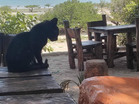 The Beach Africa : Cat