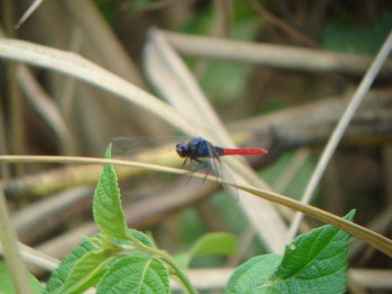 Albrook Inn : Dragonfly near pond