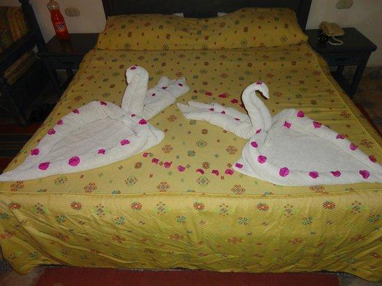 Al Diwan Resort : swans