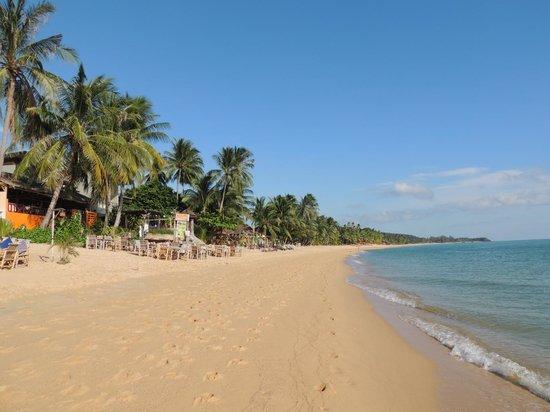 Florist Resort: Пляж