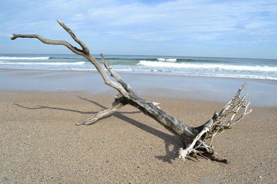 Little Talbot Island State Park: Tolle Stimmung der Natur ist dort vorhanden