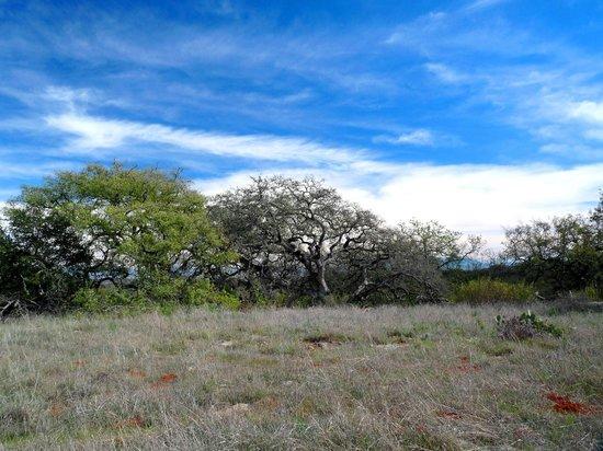Santa Rosa Plateau Ecological Reserve : trees