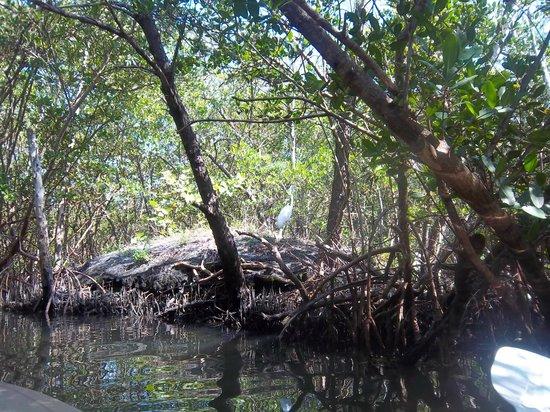 I Kayak Sarasota : Beautiful Tranquil Kayak tour
