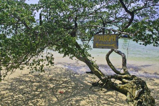 Assava Dive Resort : пляж