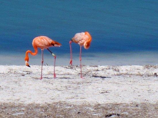 Casa Blat Ha: isla de los pájaros
