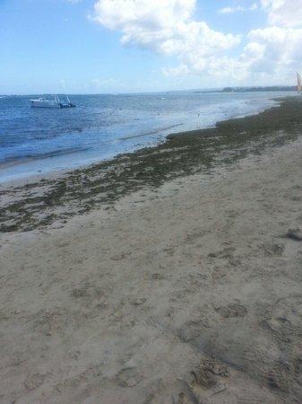 Iberostar Costa Dorada : Seaweed haven