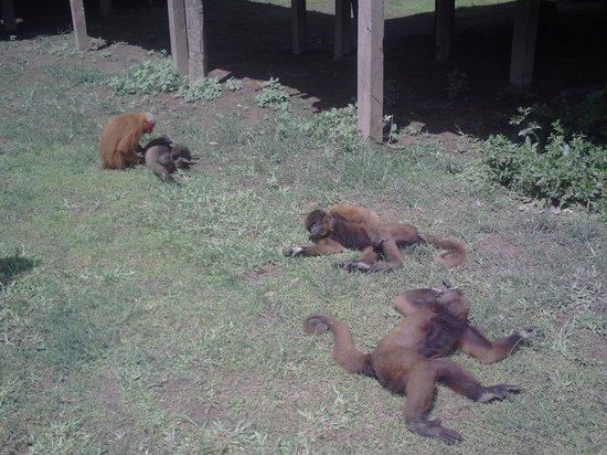 La Isla De Los Monos: Monitos tomando el sol