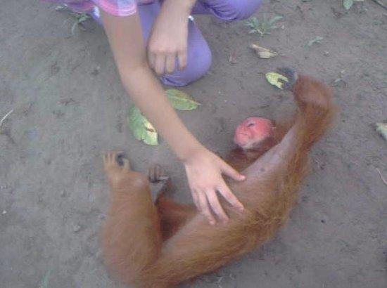 La Isla De Los Monos: Esta es captura de un video que grabé