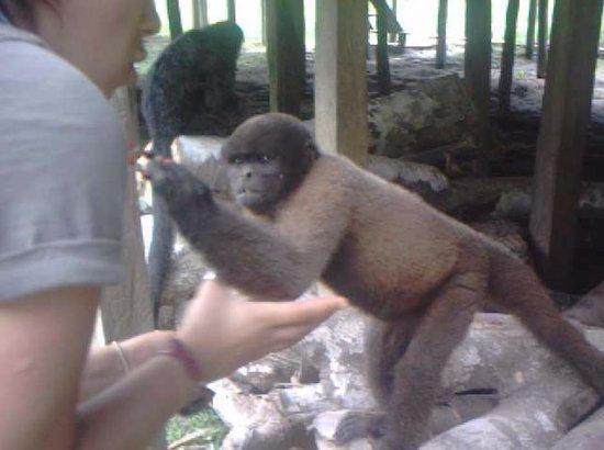 La Isla De Los Monos: Captura de otro video. Tengan cuidado con sus collares...