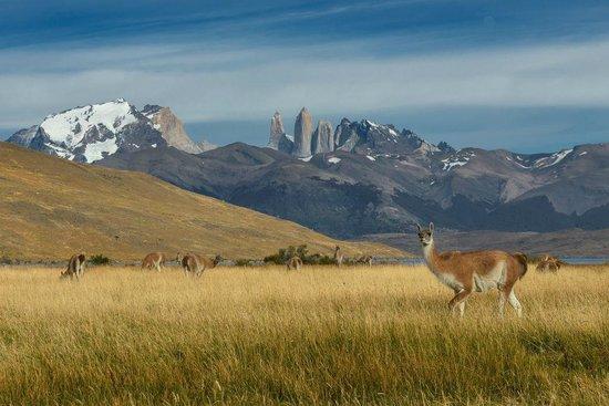 Tierra Patagonia Hotel & Spa: Landscape