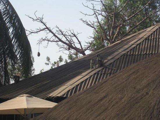Bakotu Hotel: Monkey on the roof under the baobab tree